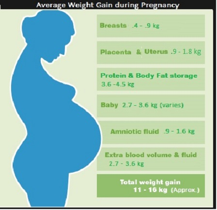 Average weight gain during pregnancy v2